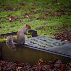 op een kerkhof....