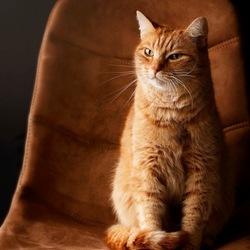 Finart portret kat