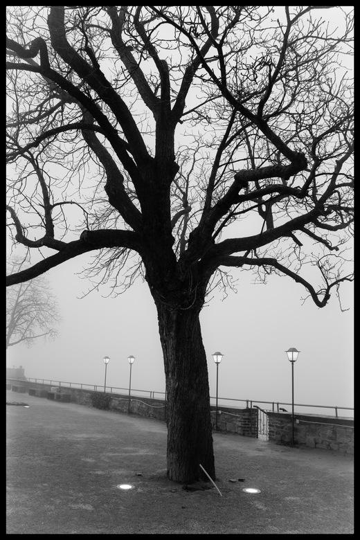 Naderende mist - bij Festung  Ehrenbreitstein am Rhein