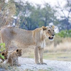 Botswana 59