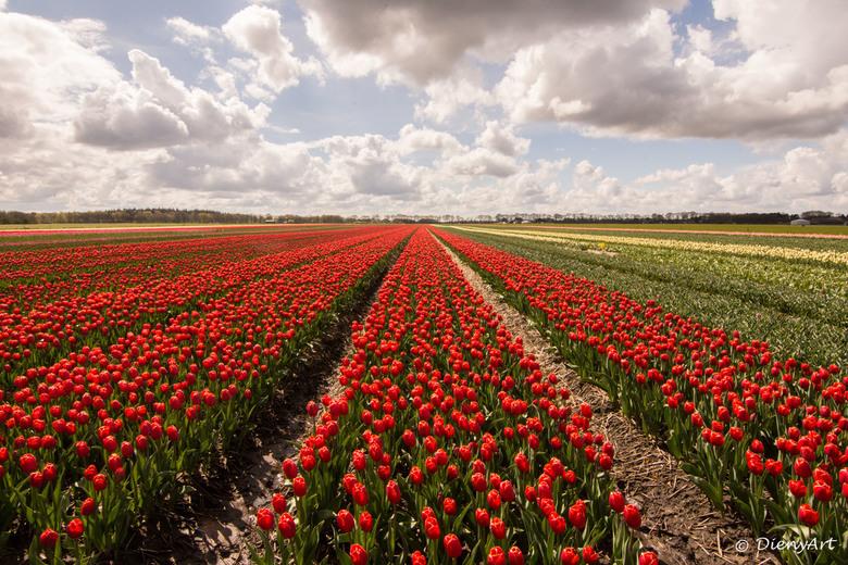 Tulpenveld in Drenthe - Sinds kort een landschapslens een nieuwe tak van sport in de fotografie. Het valt me nog niet mee wat betreft instellingen wel
