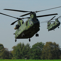 Chinook D-103