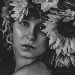 darkness sun flower