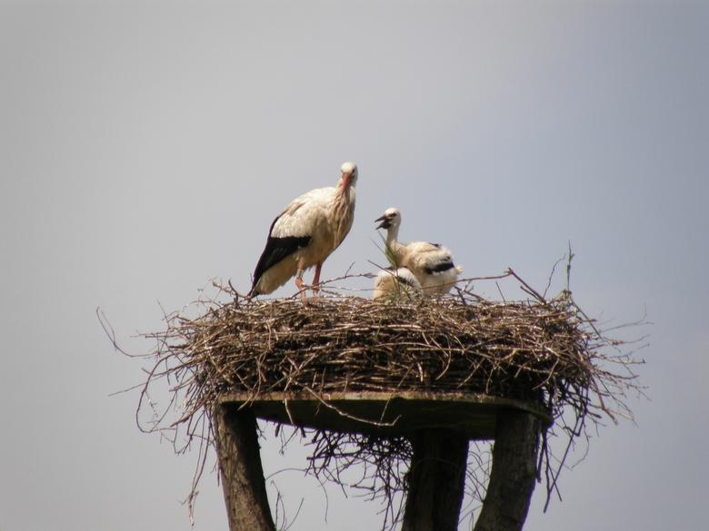 Op het nest