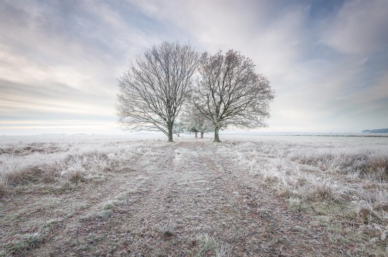 Winters landschap Dwingelderveld - Winterse omstandigheden met rijp op het Dwingelderveld.