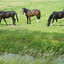 Kwartet-Foto Dick A.Otten-DAO Fotoarchief
