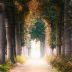 Memories of autumn