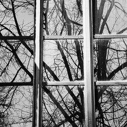 Window Mirror II