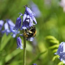 De bloementjes en de bijtjes..