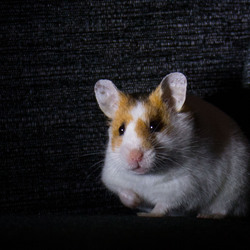 Hammie hamster...