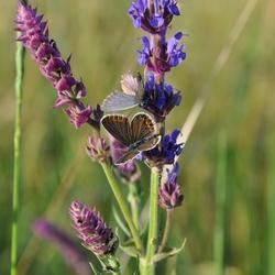 butterflies in ukraine