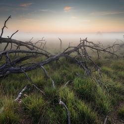 Mistige ochtend op de Kalmthoutse Heide