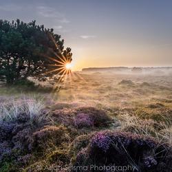 Zonnestralen in de mist over de Landerumerheide