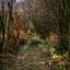 Mysterieus stukje bos