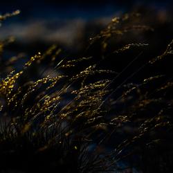 wuivend buntgras in de zomerstorm