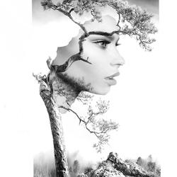 boomvrouw