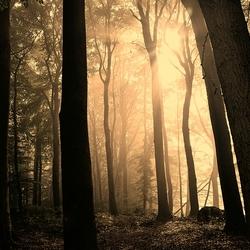 Misty en mysterious