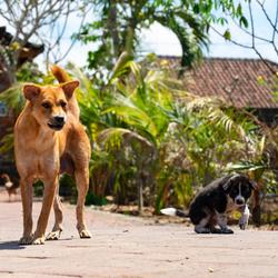 Bali_110