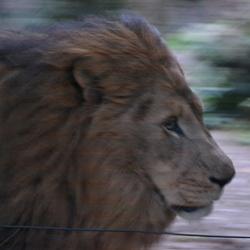 De koning van de dierentuin