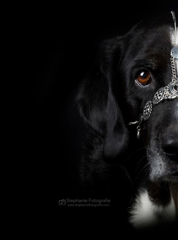 something different  - Mijn hond, maar dan net even anders als anders gefotografeerd. Wat hij op zijn neus heeft is een oude ketting die ik had liggen
