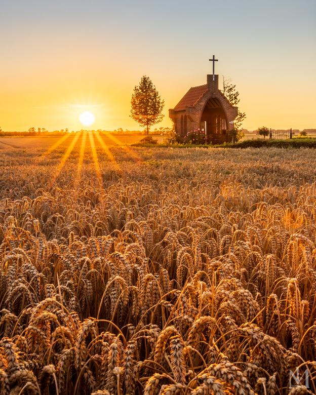 Fields of gold - Kapelletje in het graanveld tijdens zonsondergang