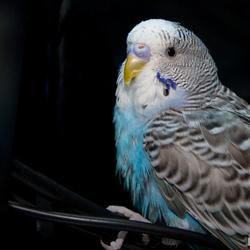 Mijn vogeltje