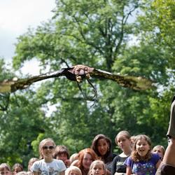 Bastaardarend vliegt over een groep kinderen