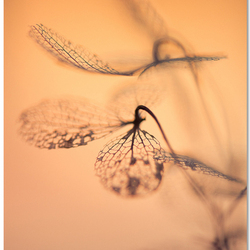 Fragile Flight