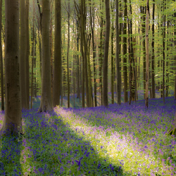 Fairytale forest