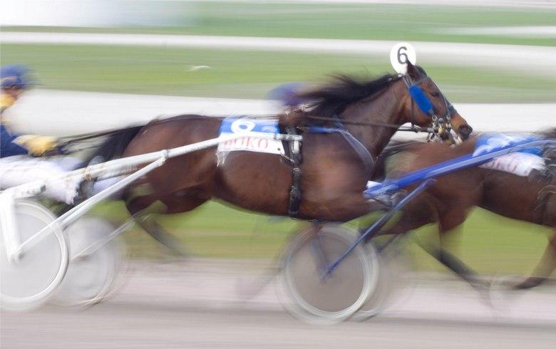 Paardendraf - Paardenrace in Wolvega