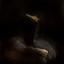 Cormorant by Night