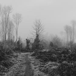 Entering The Dark Winter