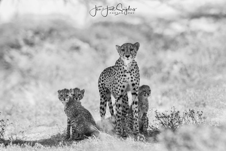 Familie kiekje - Deze schattige familie mocht ik te voet benaderen in het Onguma game reserve in Namibie. Om die reden kon ik een laag (liggend) stand