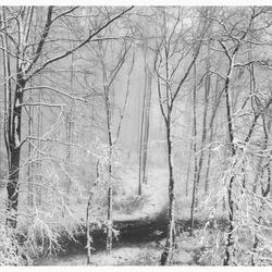 Snow, snow and snow