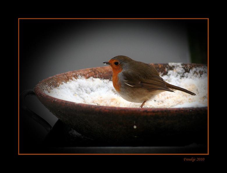 robin - Iedere woning  heeft zijn eigen roodborstje heb ik wel eens gehoord ,dus dan zal dit de onze wel zijn .Eindelijk toch gelukt om door het raam