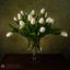 stilleven witte tulp