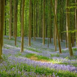 Forêt de Fleurs
