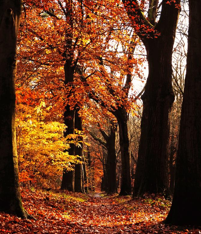 Herfstkleuren - De herfst kenmerkt zich bij uitstek om de prachtige kleuren