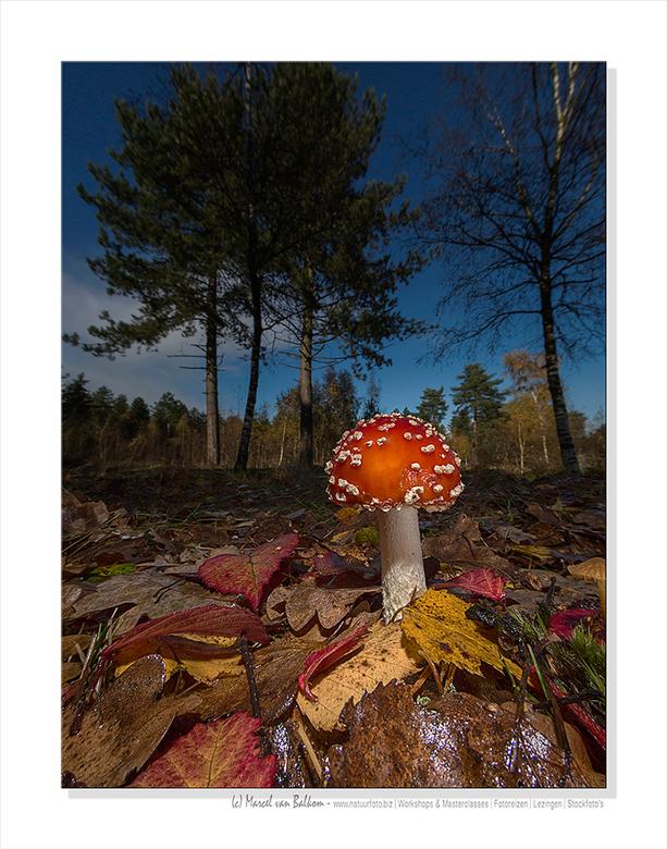Perspective fall - Een poging gedaan om een paddenstoel op een andere wijze in beeld te zetten. Voor deze opname heb ik gebruik gemaakt van een FF en