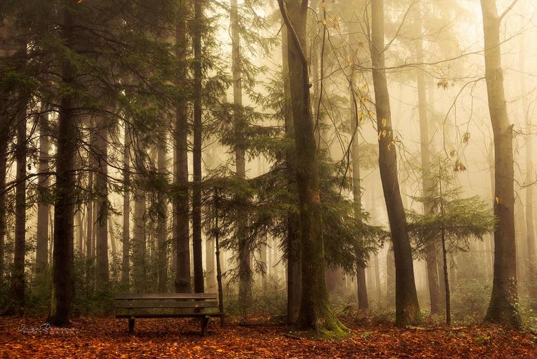 Quiet Light. -