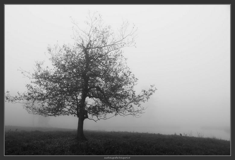 Lonely tree - Tientallen malen voorbij deze boom gelopen. Geïsoleerd door de mist, nu de moeite waard voor een plaat.