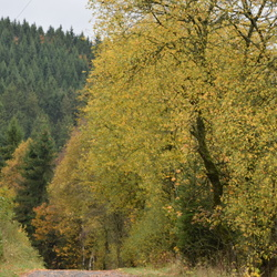 Herfst in Winterberg
