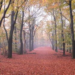 Herfst in Kwintelooijen, rhenen