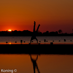 skating the sunset