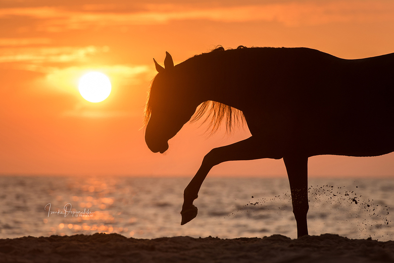 Arabian horse at the beach -