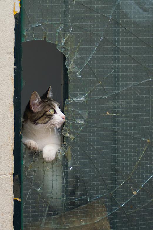 dear kitty kitty