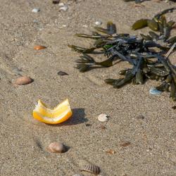 Appelsientje op het strand :)