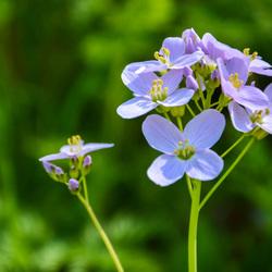 Lente bloemetje