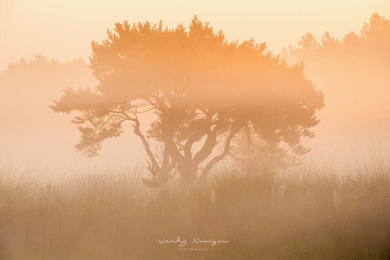Zonlicht - Prachtige ochtend met mooi licht bij het Quin Maasduinen.