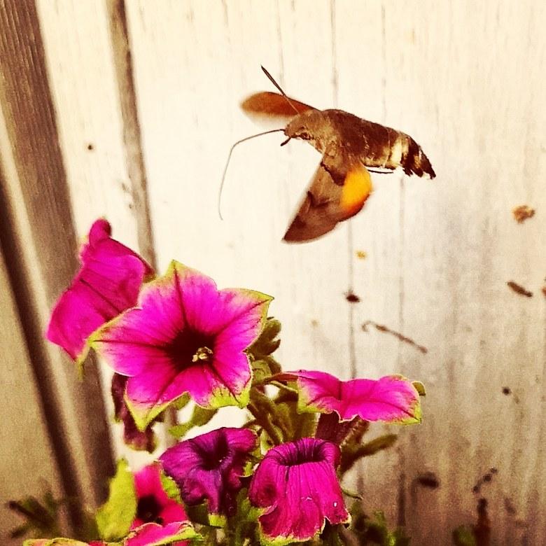 IMG_20190801_132615_472 - Kolibrivlinder